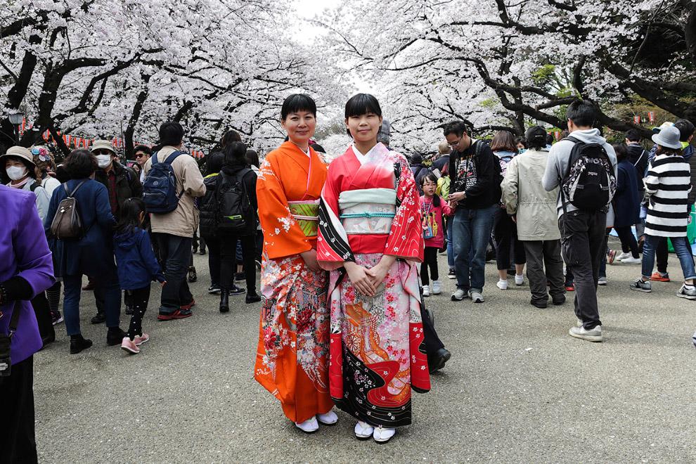 Цветение сакуры в Японии (10 фото)