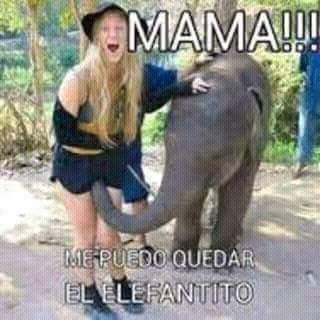 Mamá, me puedo quedar el elefantito ?