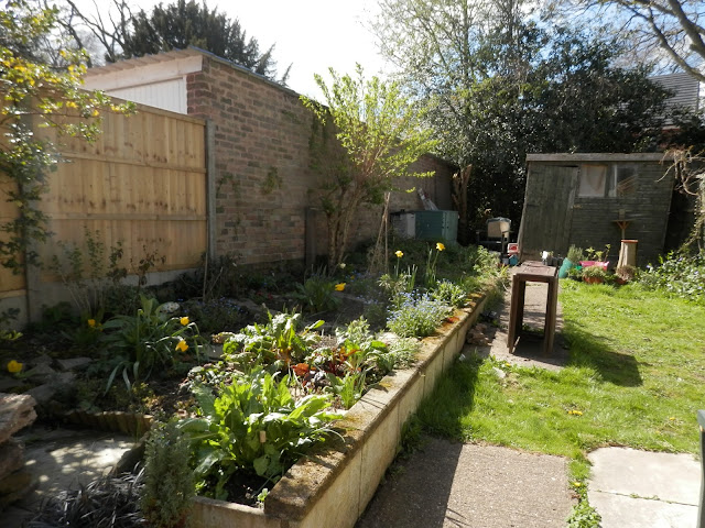 Garden, April 2016.  secondhandsusie.blogspot.com #ukgardener #gardenblogger