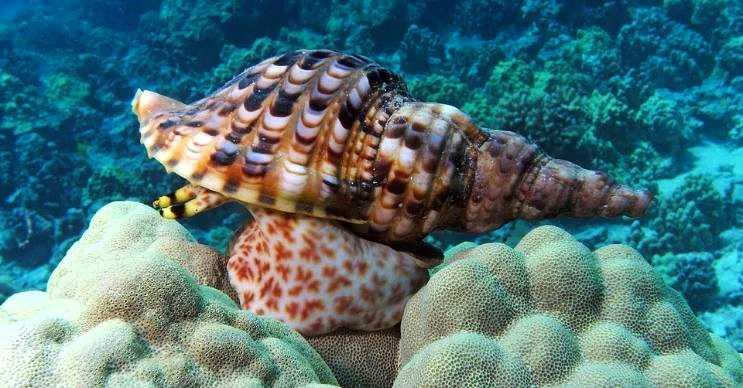 Deniz salyangozu tuzlu sularda yaşayan yumuşakçalara verilen genel bir addır.