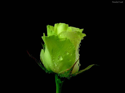 rosa-verde