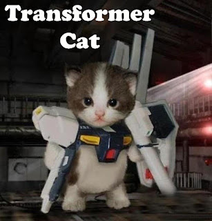 transformer cat, cat, funny cat, cat meme, funny cat meme