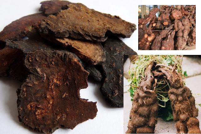 Real Life Mandrakes: Human Shaped Fleece Flower Roots
