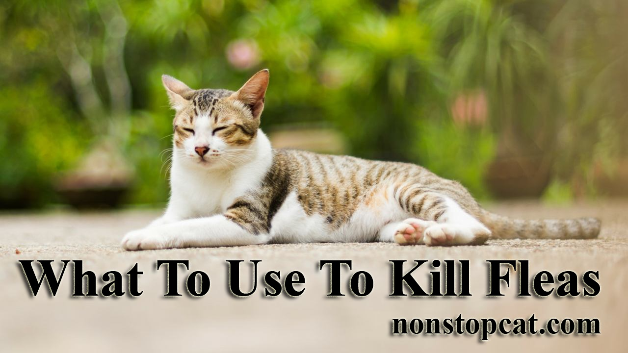What To Use To Kill Fleas