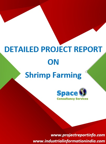 Project Report on Shrimp Farming