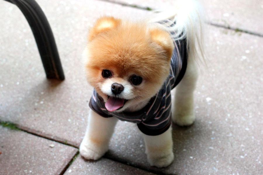 Anjing Cute Banget Wallpaper Anjing Lucu