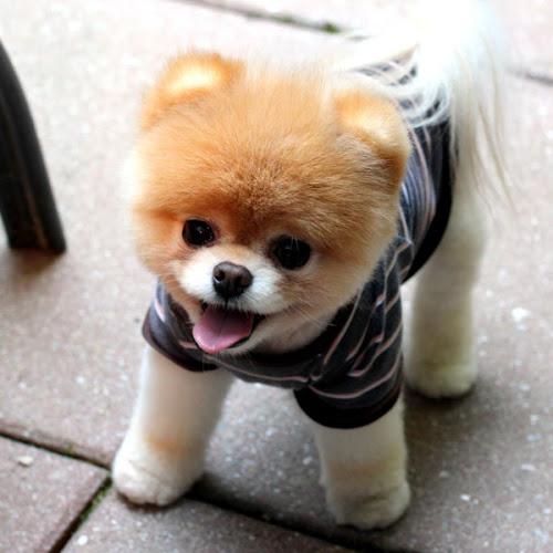 Foto Anjing Imutnya Kebangetan Cute Banget Wallpaper Lucu