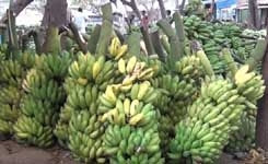 Do you eat Banana's often ? Then look at this video before you eat
