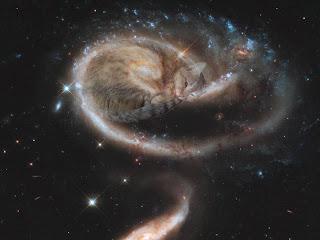cat in space galaxy