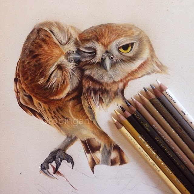 13-Owls WIP-Robin-Gan-Realistic-Color-Pencil-Animal-Drawings-www-designstack-co