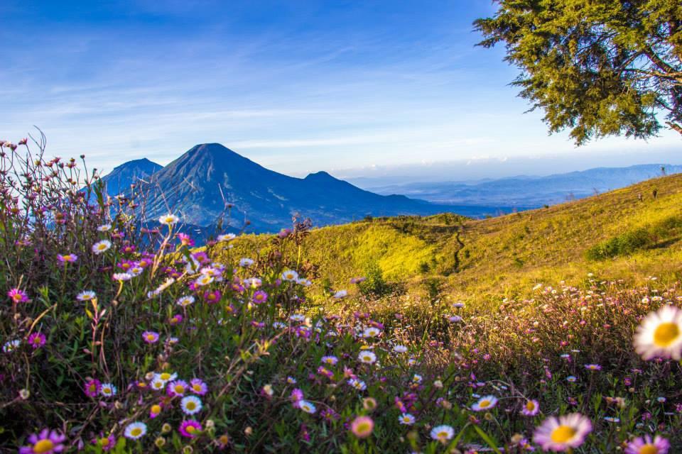 Rajasai fakat pendakian gunung Prau dan Bunga Daisy indah