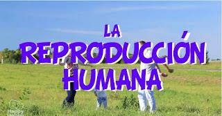 https://happylearning.tv/la-reproduccion-humana/