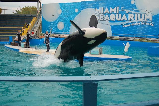 Shows e atrações do Miami Seaquarium em Key Biscayne