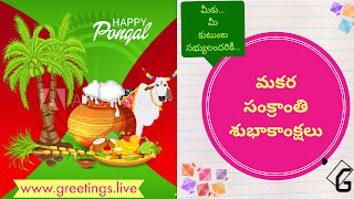 Pongal ganngireddu sugarcane coconut trees fruits Happy Pongal at left hand side,  Makara Sankranti wishes In Telugu Language at right hand side.
