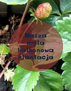http://mamadoszescianu.blogspot.com/2016/05/balkonowa-plantacja.html