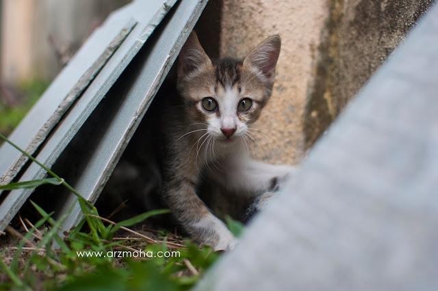 gambar anak kucing comel, anak kucing hilang, seronok bela kucing, seronok beri makan kucing, gambar anak kucing coeml dan manja,