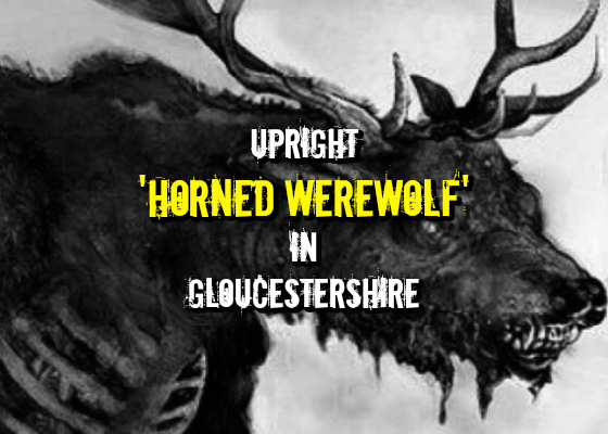 Upright 'Horned Werewolf' in Gloucestershire