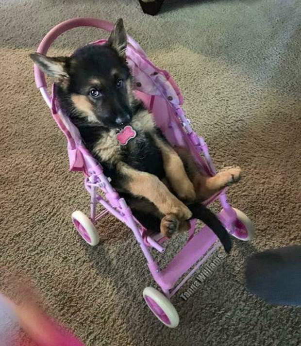 Cute dogs - part 265, funny dog picture, dog photo, best of funny dogs