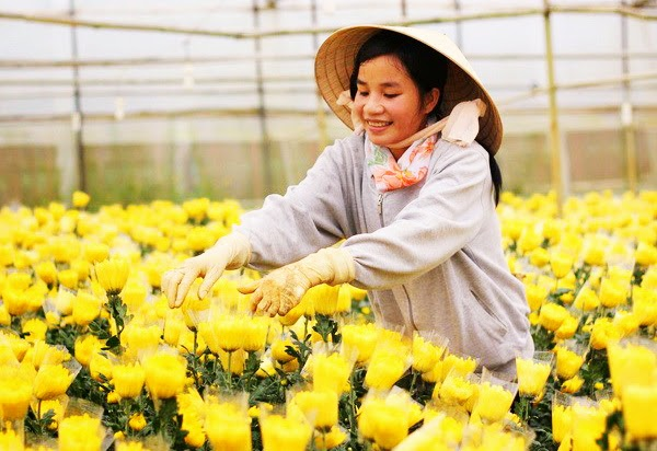 Three Famous Flower Villages In Dalat Vietnam Travel