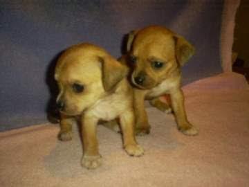 diegosax: Oh Chihuahua de Dj Bobo Anuncio de Cocacola