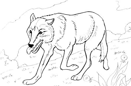 wild animal wolf printable coloring pages. Black Bedroom Furniture Sets. Home Design Ideas