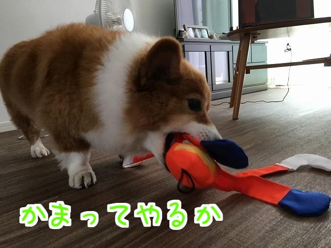 オレンジレンジャーと風太02
