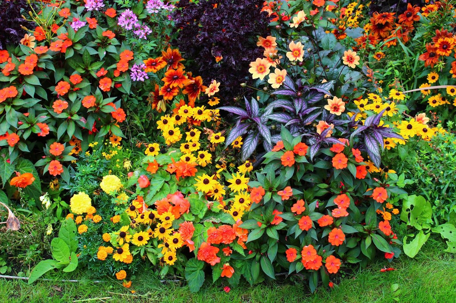 Roses du jardin ch neland un beau massif de plantes for Plante annuelle