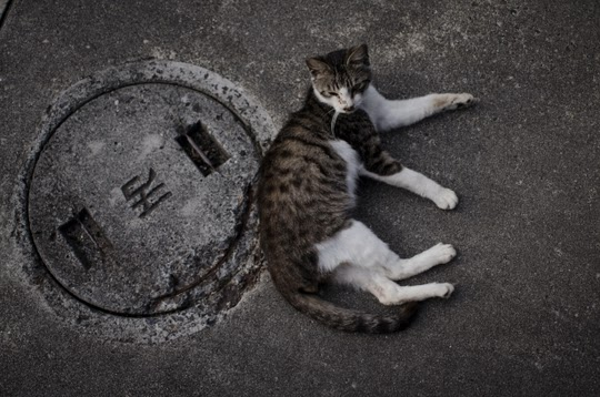 Kyoto cat