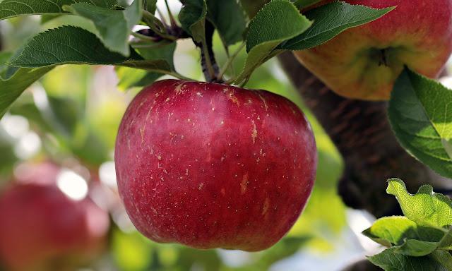 Ce vitamine contin merele? Valori nutritionale si calorii