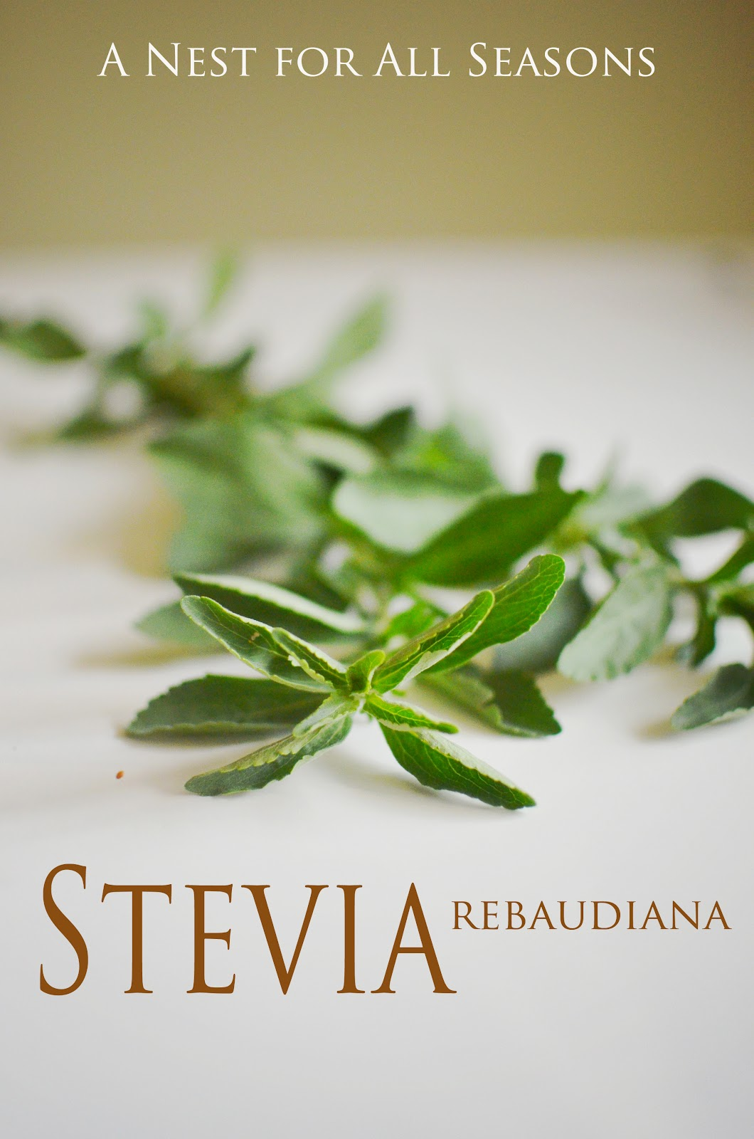 How to Brew Herbal Teas with Stevia