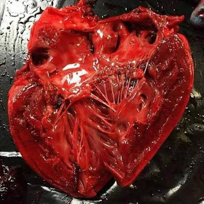 القلب-من-الداخل