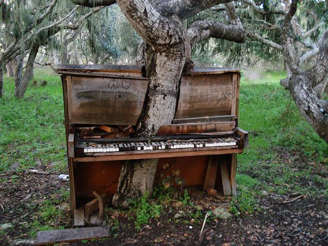 شجرة تتوسط بيانو قديم بحديقة -كاليفورنيا