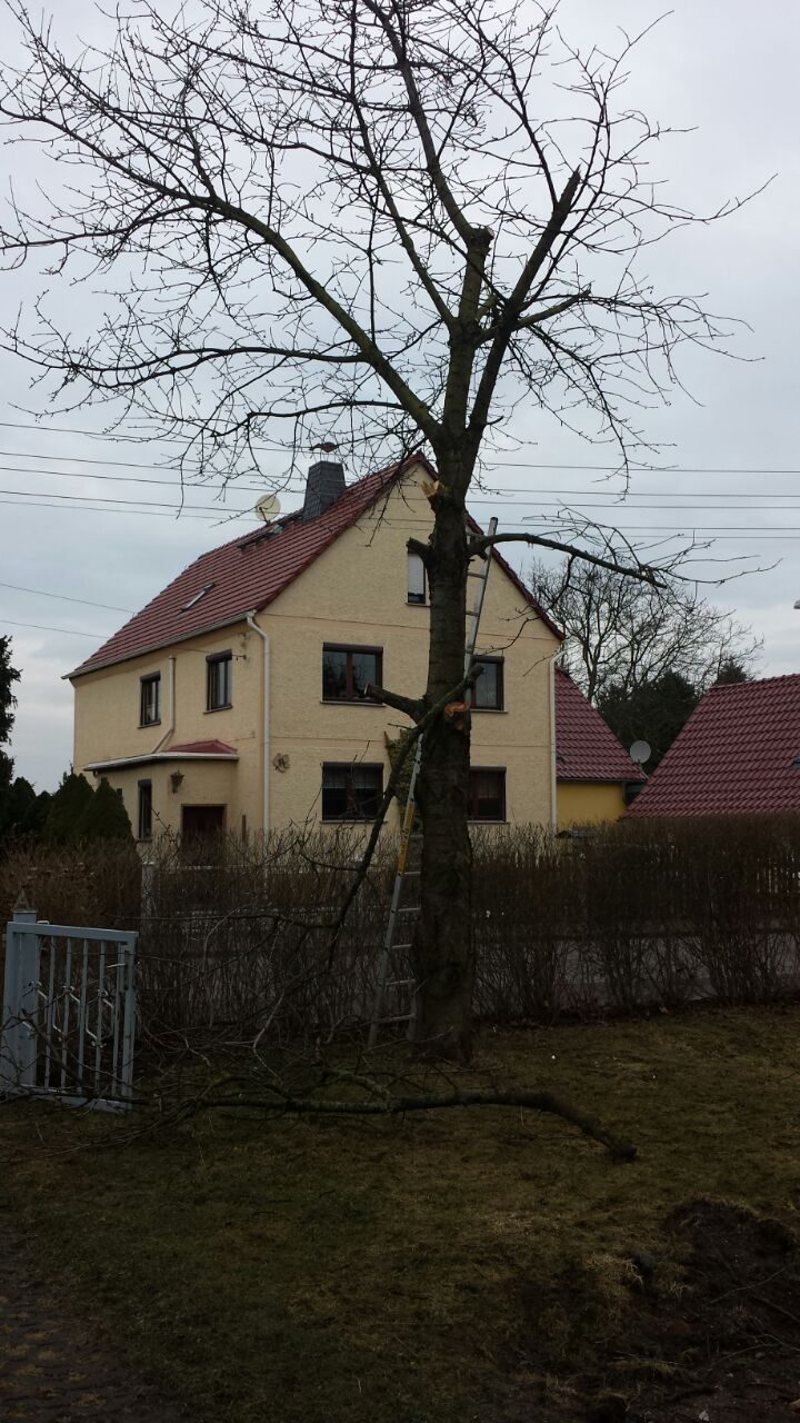Garten, Haus und Gartenhaus: Der Frühling naht ... I