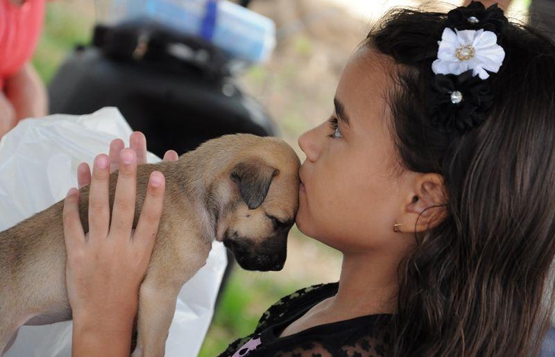 ONG Adota Patos realiza feira de adoção de cães e gatos e pede ajuda na manhã deste sábado, em Patos
