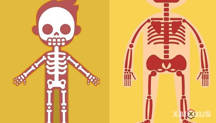 Fakta 13 - Tulang janin 18 minggu semakin kuat