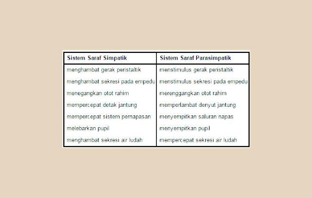 Fungsi Saraf SImpatis, FUngsi Saraf Parasimpatis, Perbedaan Saraf Simpatis dan Parasimpatis