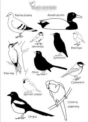 Aves comunes de los parques urbanos