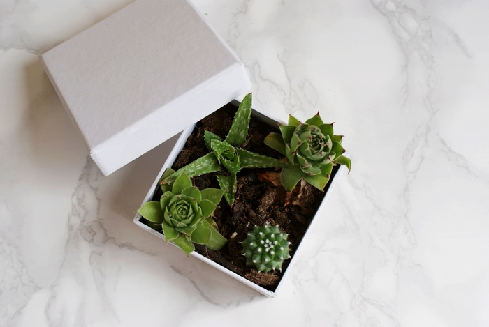 diy boxed succulents plants decor interiors