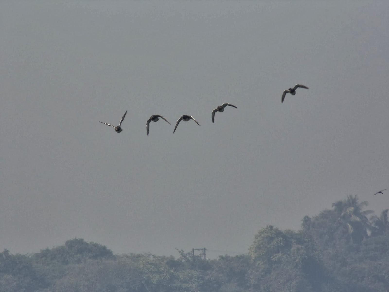 Kavadi-pat Bird watching near pune