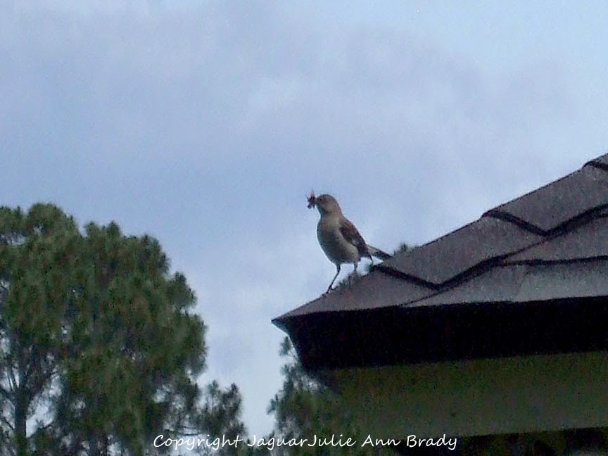 Mockingbird on the Roof with Food