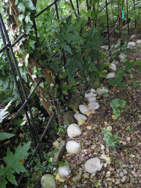 muszle w ogrodzie