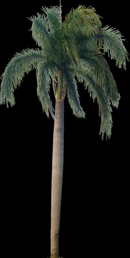 Tutup Kaca: Palm & Coconut Trees Texture