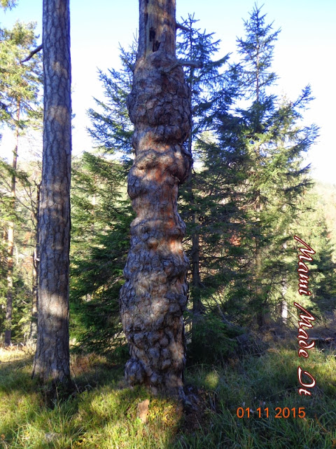 A Walk in the Woods - Ein Waldspaziergang