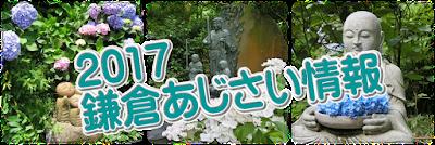 2017鎌倉アジサイ情報