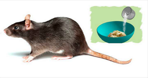 3 Home Methods To Get Rid Of Rats Once And For All