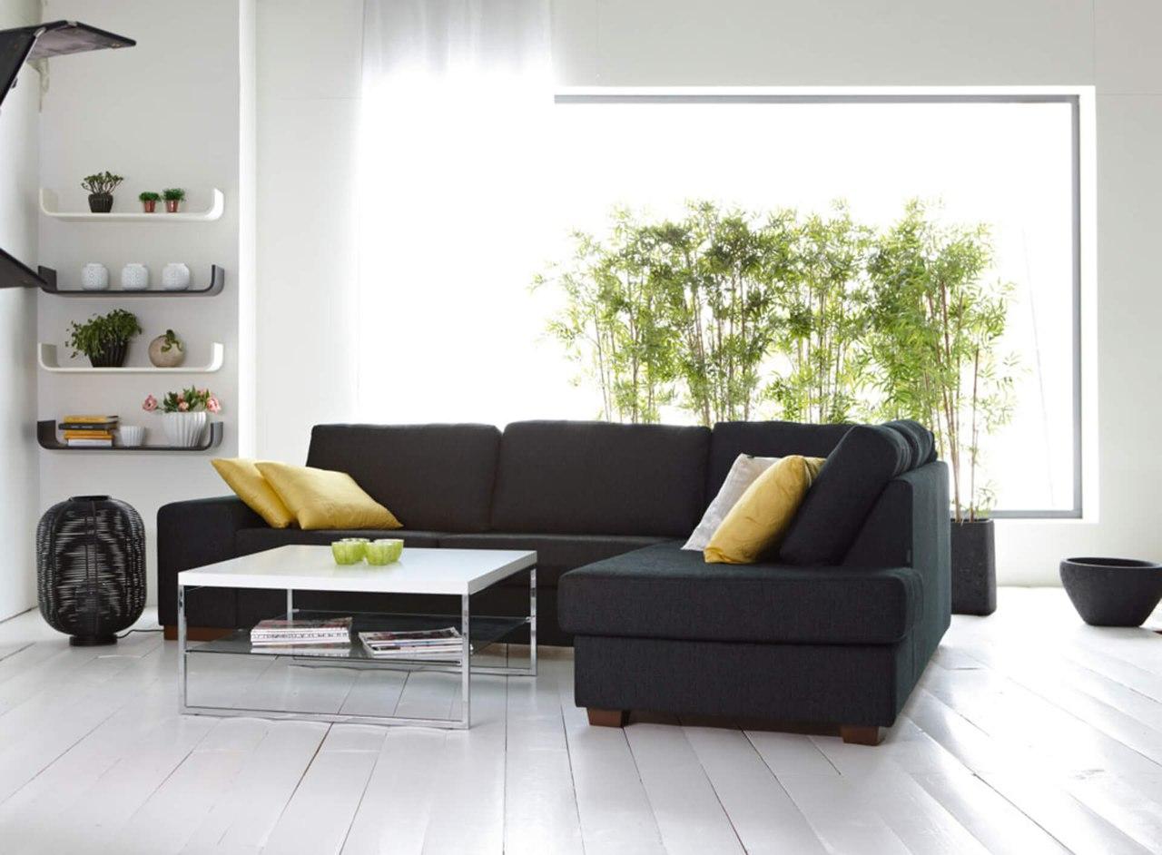 Комнатные растения и интерьер
