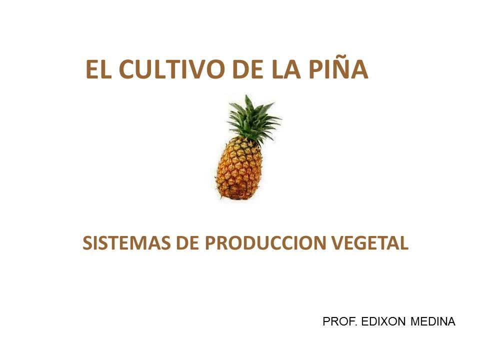 POWER POINT DEL CULTIVO DE LA PIÑA | PROF. EDIXON MEDINA ...
