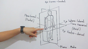 Planos y Ejes Anatómicos