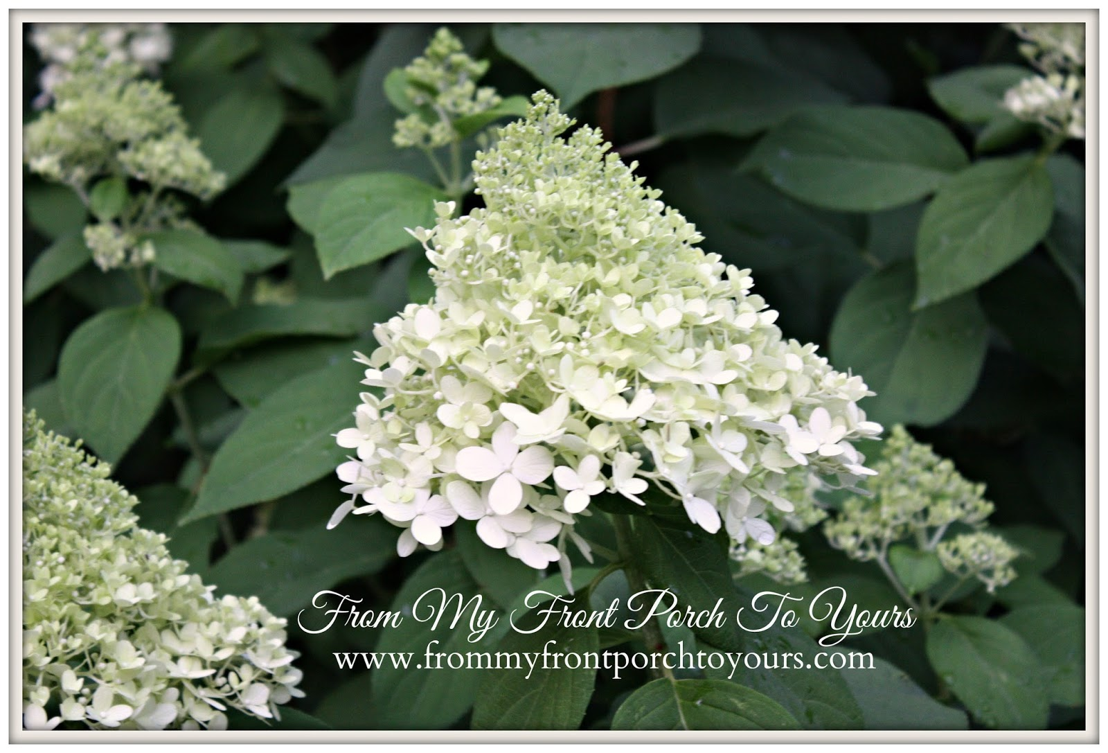 From My Front Porch To Yours- Flower Garden Hydrangea
