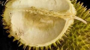 Manfaat Kulit Durian, mengatasi hawa panas dan bau setelah makan durian